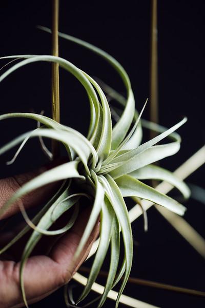 shawna_diy_hanging_plants-10-L